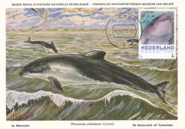 þþþ - Zoogdieren Bruinvis