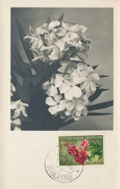 ®® 1955 NVPH 250 NED. ANTILLEN Oleander