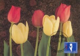 ® 2014 - CATA 3147 Tulpen