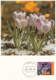 ® 1996 CATA 1671a Krokus