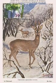 2004 NETHERLANDS Deer