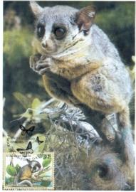 1998 UNITED NATIONS Galago primate