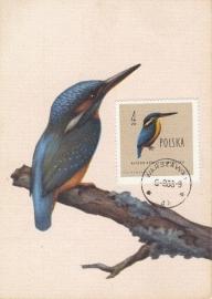 1965 POLAND - Kingfisher