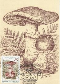 1987 ROMANIA - Mushroom Amanita