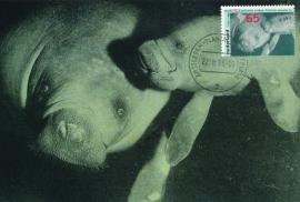 ® 1988 - CATA 1400 Zeekoe