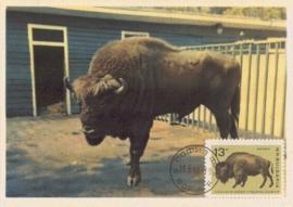1966 BULGARIA - Bison Wisente