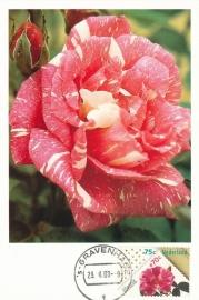 ® 1988 - CATA 1397 Rozen