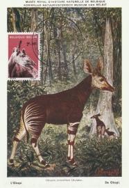 1961 BELGIUM - Okapi