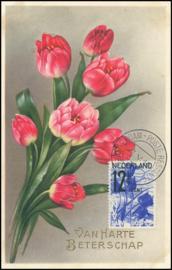 © 1933 NETHERLANDS Tulips