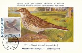 B057 NEDERLAND Veldleeuwerik