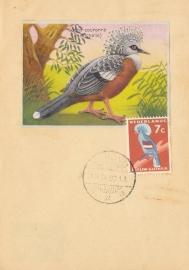 ®®®®® 1959 CATA 54 NNG Kroonduif