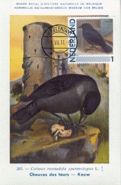 B021 NEDERLAND Kauw