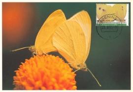 ® 1993 - CATA 1555 Groot Koolwitje