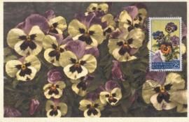 1957 SAN MARINO Violets