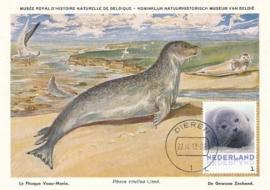 þþþ - Zoogdieren Zeehond