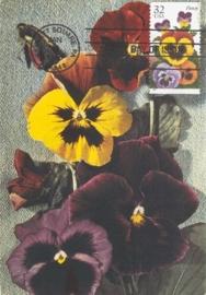 1996 USA - Violets
