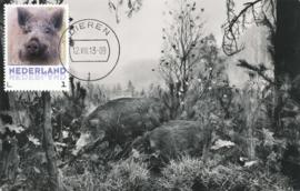 þþþ - Zoogdieren Wild zwijn