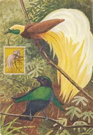 ®®®®® 1954 CATA 28 NNG Paradijsvogel Manokwari