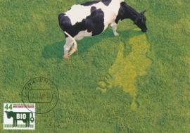 ® 2008 - CATA 2552 Koeien
