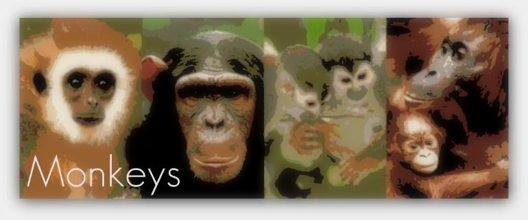 monkeybanner.jpg