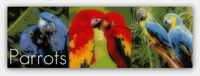 parrotsbanner.jpg