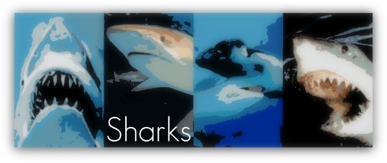 sharkbanner.jpg