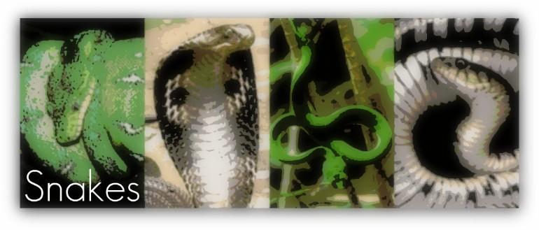 snakesbanner.jpg