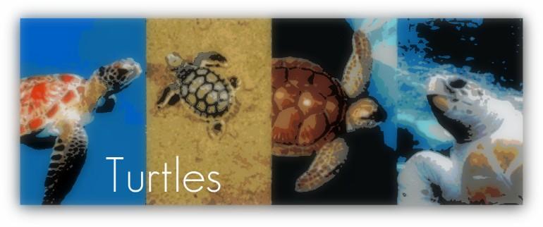 turtlebanner.jpg