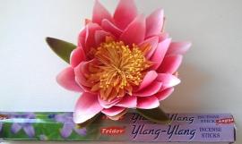 Ylang Ylang ( 20 sticks )
