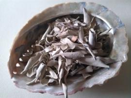 Abalone Schelp met 25 gram Witte Salie
