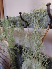 Tillandsia - groen -  140 cm