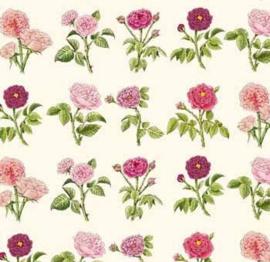 Josephines roses 2