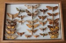 Kistje met vlinders