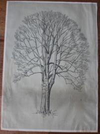 Botanische tekening van de Beuk