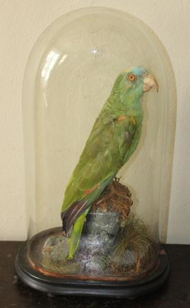 Papegaai in stolp