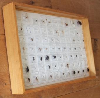 Oude collectie met insecten in kist