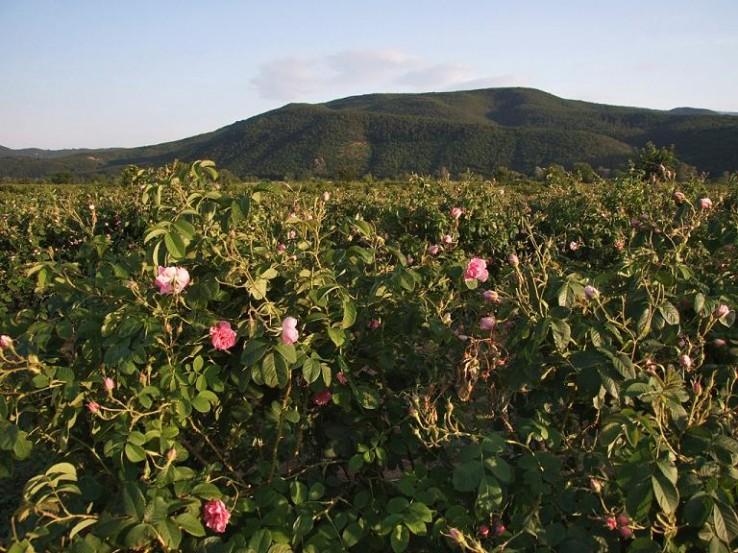 rozenvallei.jpg