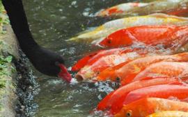 Visziekte algemeen