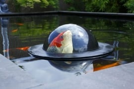 Fishdome / Koi Pearl Ø56cm