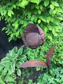Tuinsteker Tulp, roestbloem.