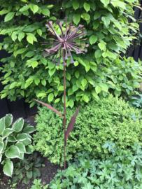 Tuinsteker Paardenbloem, roestbloem, met twee bladeren.