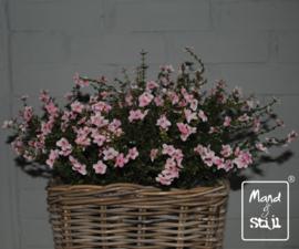 Kunstbloemen set roze
