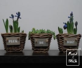 Set van 3 plantenbakjes (18x18x14cm)
