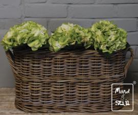 Set Hortensia Wit/Groen groot