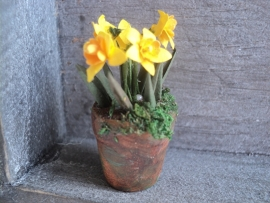 Daffodils in plant pot