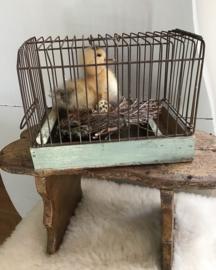 Vogelkooitje met eendje