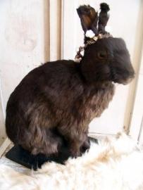 Opgezet konijntje...