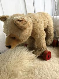 Oude beer op wielen