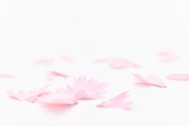 FLOWER PENCIL SET