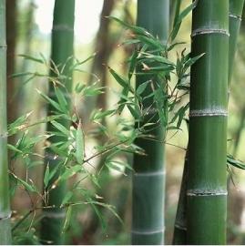 bamboe raam decoratie statische natuur x9